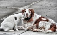 Funny Dogs And Cats Living Together 19 Free Wallpaper