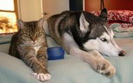 Funny Dogs And Cats Living Together 2 Cool Wallpaper