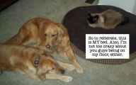 Funny Dogs And Cats Living Together 22 Desktop Background