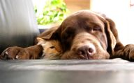Funny Dogs And Cats Living Together 24 Free Wallpaper