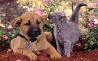 Funny Dogs And Cats Living Together 25 Free Hd Wallpaper