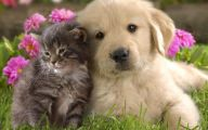 Funny Dogs And Cats Living Together 26 Desktop Background