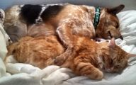 Funny Dogs And Cats Living Together 28 Free Wallpaper