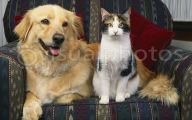 Funny Dogs And Cats Living Together 29 Desktop Background