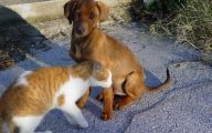 Funny Dogs And Cats Living Together 30 Desktop Background