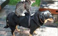 Funny Dogs And Cats Living Together 31 Desktop Wallpaper