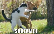 Funny Dogs And Cats Living Together 32 Widescreen Wallpaper
