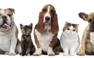 Funny Dogs And Cats Living Together 4 Cool Wallpaper