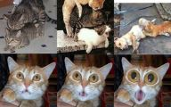 Funny Dogs And Cats Living Together 5 Wide Wallpaper