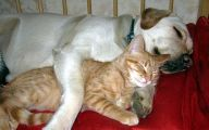 Funny Dogs And Cats Living Together 7 Desktop Wallpaper