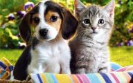 Funny Dogs And Cats Living Together 8 Desktop Background