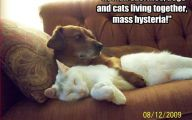 Funny Dogs And Cats Living Together 9 Cool Wallpaper