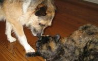 Funny Dogs Annoying Cats 10 Wide Wallpaper