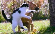 Funny Dogs Annoying Cats 3 Free Hd Wallpaper