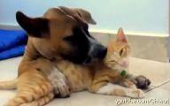 Funny Dogs Annoying Cats 4 Background Wallpaper
