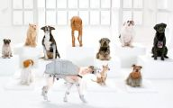 Funny Dogs Barking 1 Desktop Wallpaper