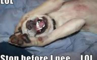 Funny Dogs Barking 12 Background Wallpaper