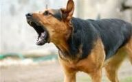 Funny Dogs Barking 16 Background Wallpaper