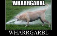 Funny Dogs Barking 19 Widescreen Wallpaper