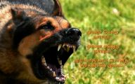Funny Dogs Barking 23 Cool Hd Wallpaper