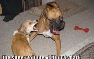 Funny Dogs Barking 7 Cool Hd Wallpaper
