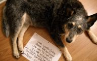 Funny Dogs With Signs 1 Widescreen Wallpaper