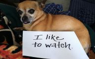 Funny Dogs With Signs 10 Desktop Wallpaper