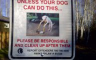 Funny Dogs With Signs 11 Desktop Wallpaper