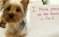 Funny Dogs With Signs 14 Background