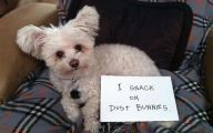Funny Dogs With Signs 16 Wide Wallpaper