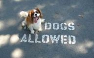 Funny Dogs With Signs 2 Wide Wallpaper