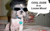 Funny Dogs With Signs 20 Free Hd Wallpaper