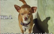 Funny Dogs With Signs 22 Wide Wallpaper