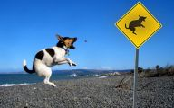 Funny Dogs With Signs 23 Cool Wallpaper