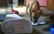 Funny Dogs With Signs 5 Cool Hd Wallpaper