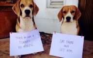Funny Dogs With Signs 8 Wide Wallpaper