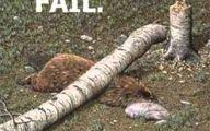 Funny Fails Animals 16 Wide Wallpaper
