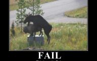 Funny Fails Animals 2 Desktop Background