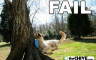 Funny Fails Animals 25 Wide Wallpaper