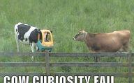 Funny Fails Animals 26 Desktop Wallpaper