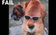 Funny Fails Animals 27 Desktop Wallpaper