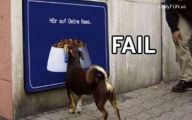 Funny Fails Animals 4 Free Hd Wallpaper
