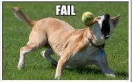 Funny Fails Animals 8 Free Wallpaper