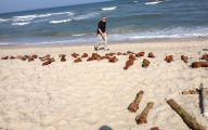 Funny Fails At The Beach 24 Free Hd Wallpaper