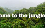 Funny Jungle Costumes 17 Free Hd Wallpaper