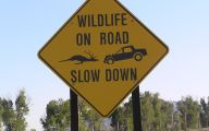 Funny Road Signs 9 Wide Wallpaper