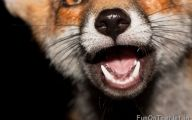 Funny Selfies With Animals 12 Background