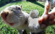 Funny Selfies With Animals 18 Desktop Wallpaper