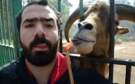 Funny Selfies With Animals 21 Free Hd Wallpaper