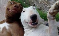 Funny Selfies With Animals 22 Cool Hd Wallpaper